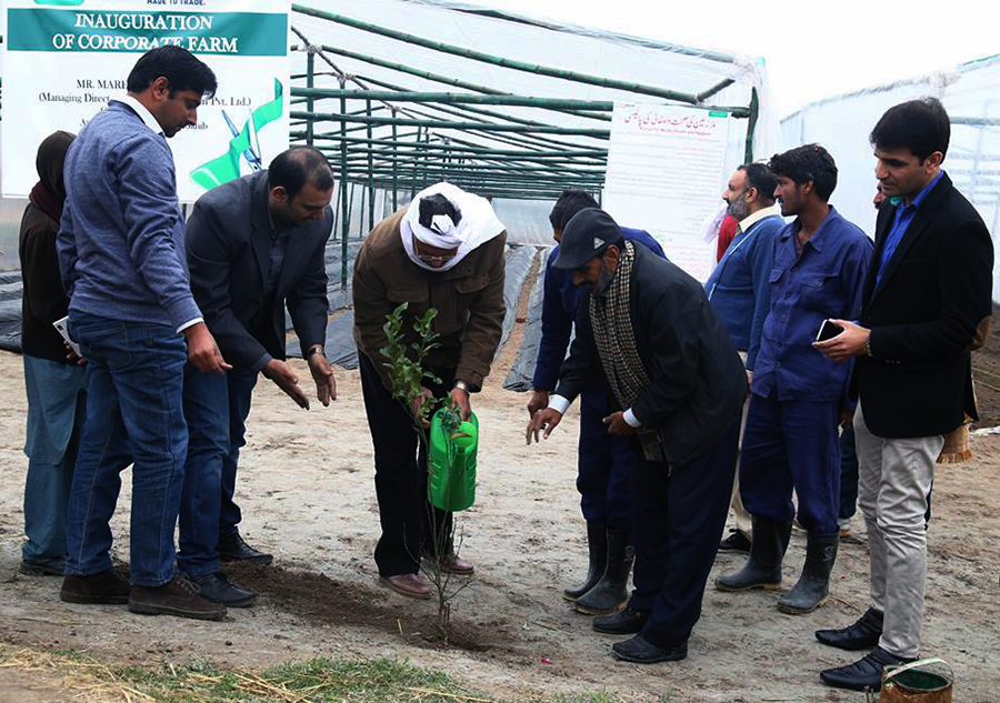 Mr. Pervaiz Akhtar watering the lemon plant at farm inauguration