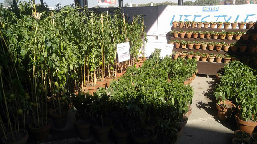 A View of Plants Display at Metro Thokar Store